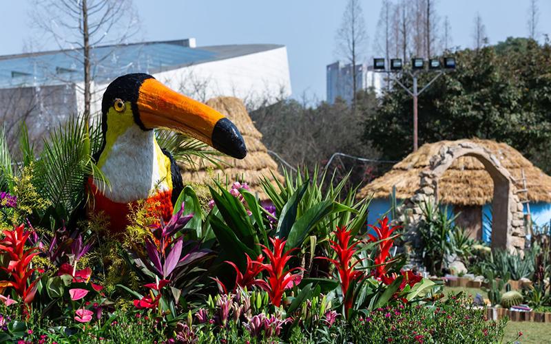 南美洲大嘴鸟.jpg